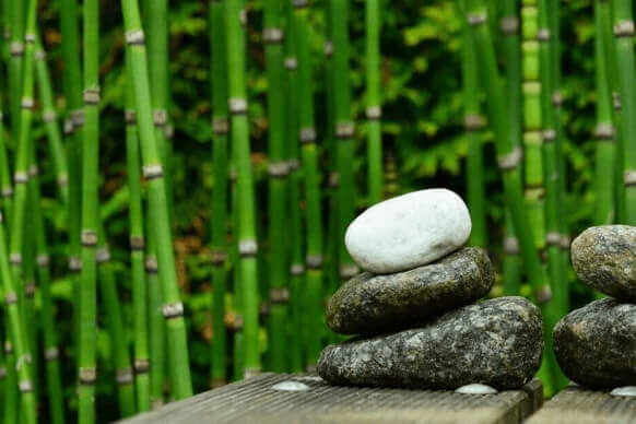 Interesting facts about Bamboo Salt