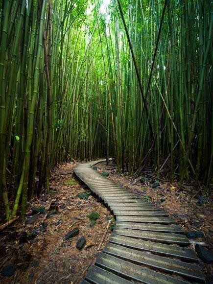 Bamboo roads - Bamboooz