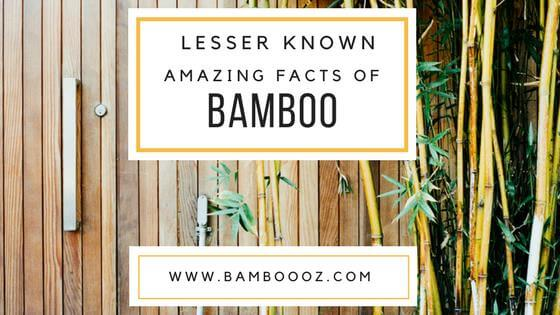 Lesser known amazing facts of Bamboo