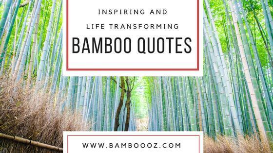 Inspiring and Life Transforming Top Bamboo Quotes
