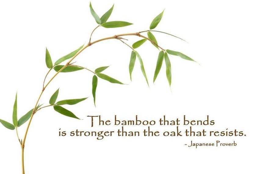 Japanese proverb - Bamboo Quotes - Bamboooz